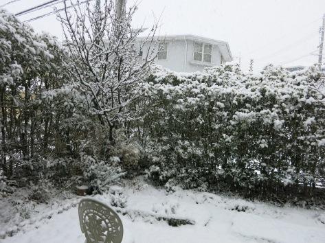Snowed in